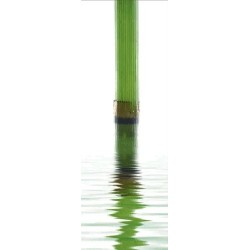 "постер "" Бамбук в воде"" 25*70 рама 5"